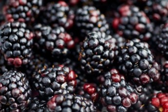 Top five blackberry recipes