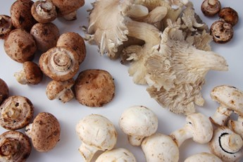Mushrooms: The best substitution for meat